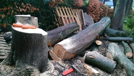 Tree removal Blackburn